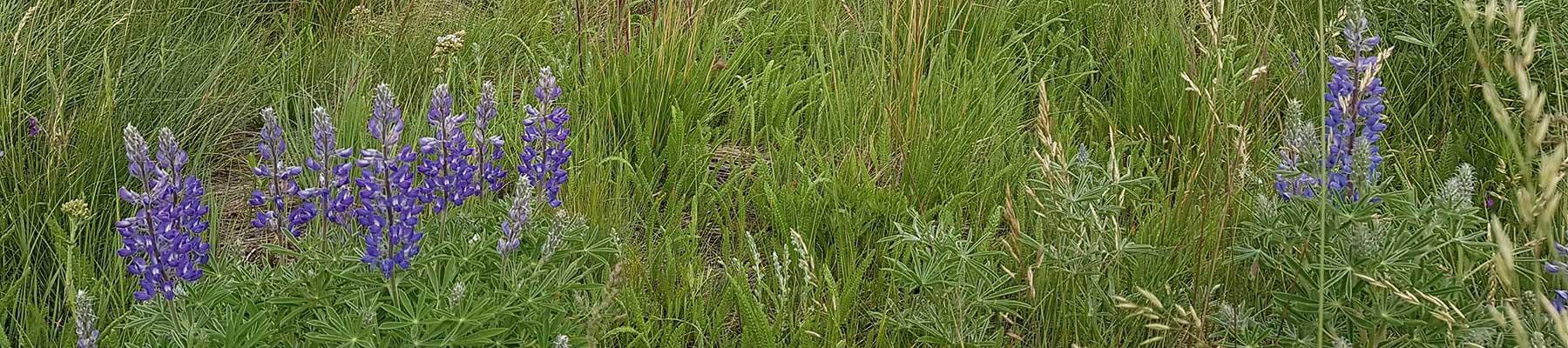 Alberta Prairie Foothills fescue porcupine hills