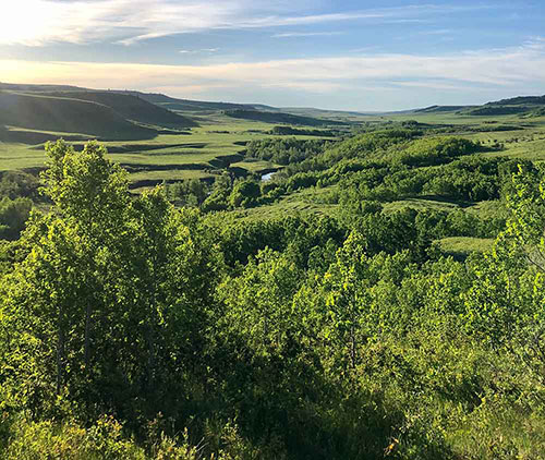 About prairie landscape- Katheryn Taylor