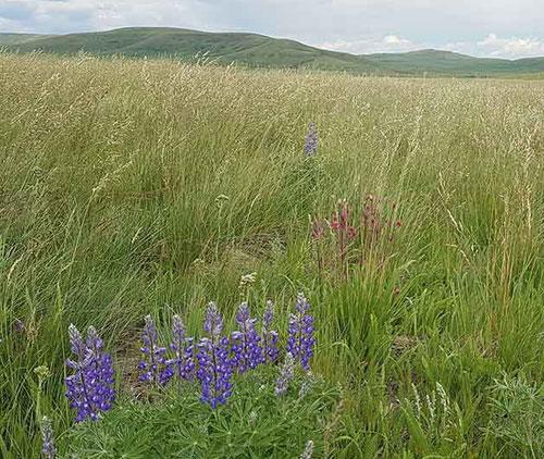 Jane Lancaster Landscape About Prairies